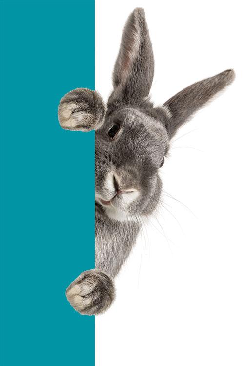 kaninchen tierarzt heumaden