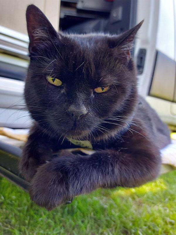 Katze mit Verhaltensauffälligkeiten